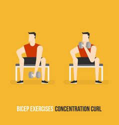 Bicep exercises concentration curl vector
