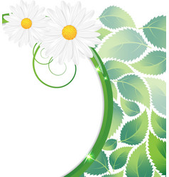 Green leaves and chamomiles vector
