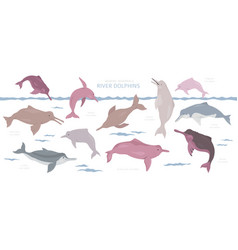 River dolphins set marine mammals collection vector