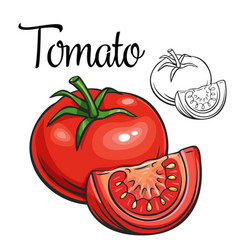 Tomato drawing icon vector