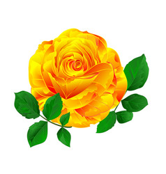 yellow rose simple stem with leaves vintage vector image