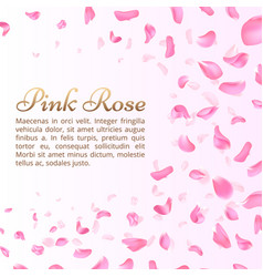 pink rose or sakura falling petals elegant vector image