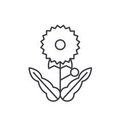 dandelion line icon concept dandelion flat vector image