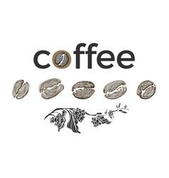 Set coffee bean branch vector