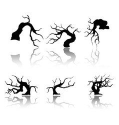 branches and shadows of bonsai tree vector image
