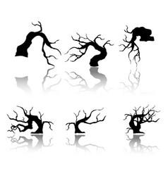 branches and shadows of bonsai tree vector image