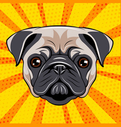 pug dog face dog portait vector image