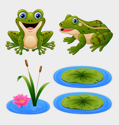 set of cartoon frog and water lily vector image