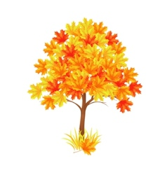 red maple tree vector image