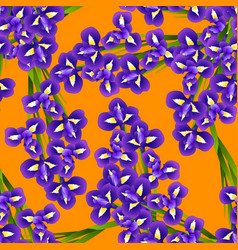 dark blue purple iris flower on orange background vector image