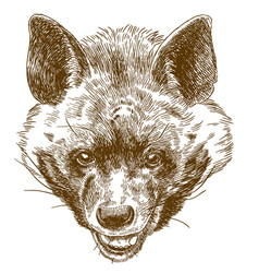 engraving of hyena head vector image