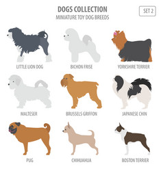 miniature toy dog breeds collection isolated on vector image