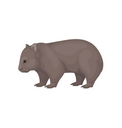 detailed flat icon of wombat side view vector image