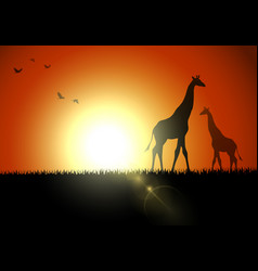giraffe silhouette in sunset at savanah vector image