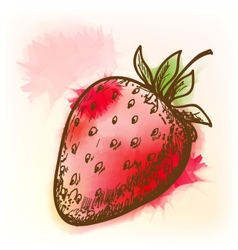 Strawberry watercolor painting vector image