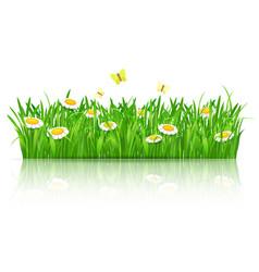 summer field flowers with butterflies vector image