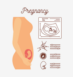 white background with color silhouette pregnancy vector image