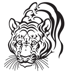 head of tiger vector image vector image