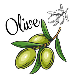 Olive drawing icon vector