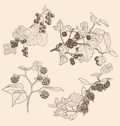 Set of berries red currant black currunt vector