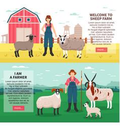 sheep breeding flat banners vector image