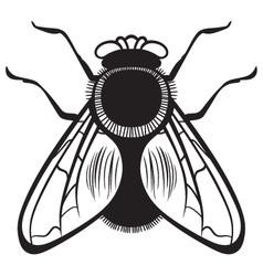 Silhouette flies vector image