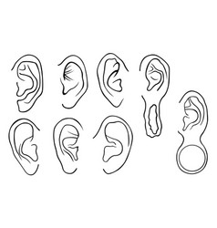 set of different ears vector image vector image