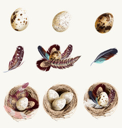 collection easter eggs with nests feathers eggs vector image