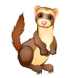 funny ferret toy isolated on white background vector image