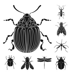 Isolated object of insect and fly icon collection vector