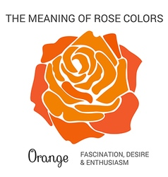 Orange rose infographics vector