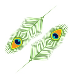 Peacock feather set collection Exotic tropical vector image