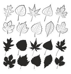 Set of tree leaves vector