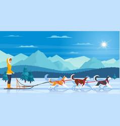 sleddog huskies vector image