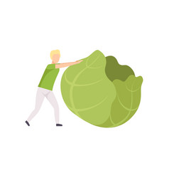 young man rolling huge cabbage healthy eating vector image