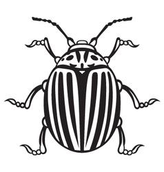 Colorado beetle vector image vector image