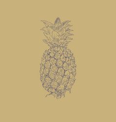 pineapple fruit sketch vector image vector image