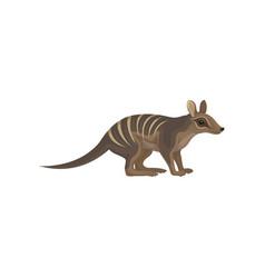 Detailed flat icon of australian numbat vector