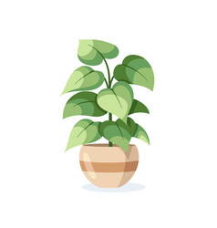 Flower in pot isolated on white background vector