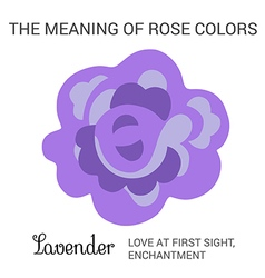 Lavender rose infographics vector