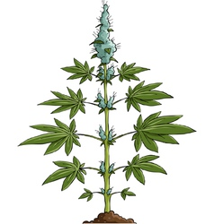 cannabis vector image vector image