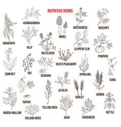 Best nutritive herbs set vector