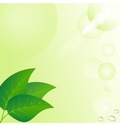 Eco background with drops at leaves vector