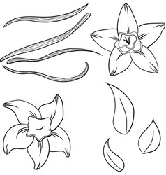 vanilla set in cartoon style vector image