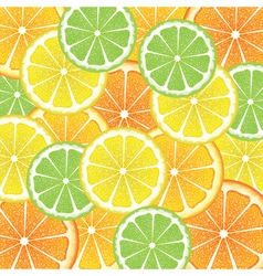 Various Citrus Slices5 vector