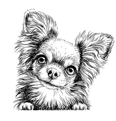 chihuahua dog wall sticker vector image