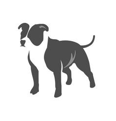 Dog pitbull terrier vector