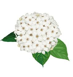 Hydrangea flower vector