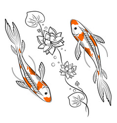 Koi carps fish with lotus vector