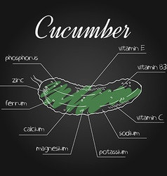 Nutrient list for cucumber vector